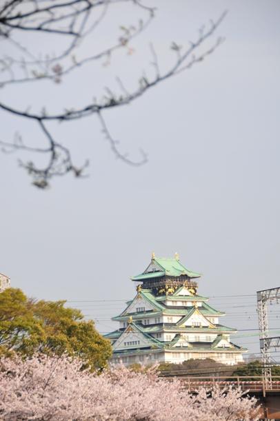 sakura&osakajo.JPG